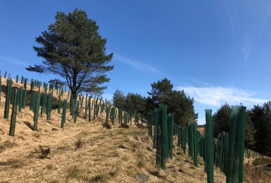 Crompton Moor tree planting