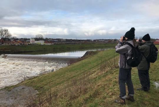 Birdwatching on River Irwell