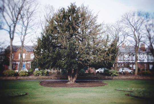 Jubilee Park Yew Tree, Wigan