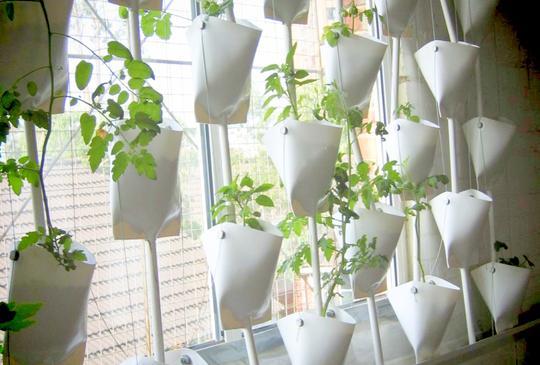 Experimental hydroponics system. Photo by Debbie Ellen.